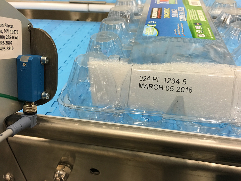 Print Sample Clear Egg Carton